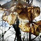 Sunlit flowers by AdelinaKrupski