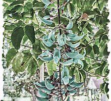 Jade Vine by Brenda Boisvert