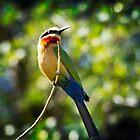 { bird of the rainbow } by Brooke Reynolds