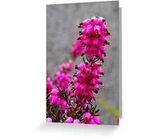 spring heather in the pink Greeting Card