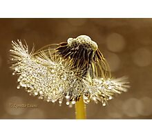 A golden morning Photographic Print