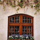 The Window Boxes by Gayle Dolinger