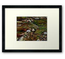 Creeky Framed Print