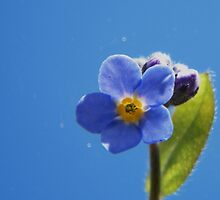 Blue on Blue by ElsT