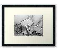 Whale's Vertebrae  Framed Print