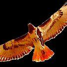 BIRD OF PREY by RoseMarie747