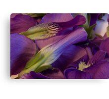 Violets Canvas Print