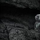 Thoth, God of Wisdom invoking A'an by alan shapiro