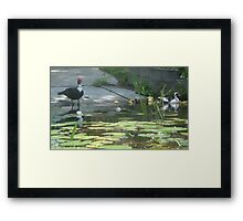 NOONTIME SWIM Framed Print
