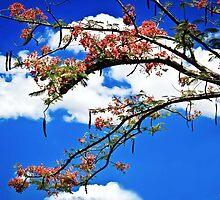 Summer Blossom - Tanay, Rizal by Michael  Habal