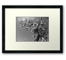 desert twig scape Framed Print