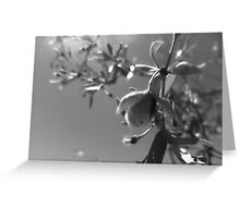 desert twig scape Greeting Card