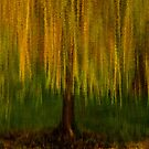 Dreaming About Willows by Mary Ann Reilly