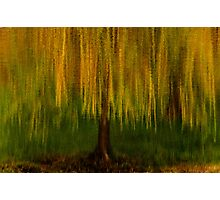 Dreaming About Willows Photographic Print