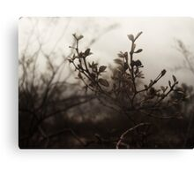 Brush Feild Canvas Print