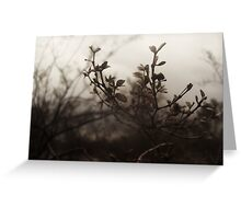 Brush Feild Greeting Card