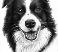 Border Collie Smile by Nicole Zeug