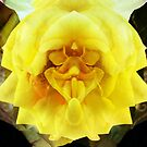 "A Face in the Flower by Christine ""Xine"" Segalas"