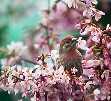 Stop Eating My Cherry Blossoms by Natalie Parker