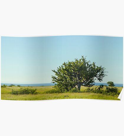Tree by the Sea Poster