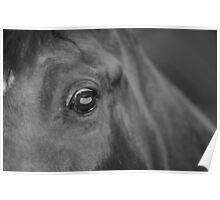 Equus Equus Oculi Uniti Poster