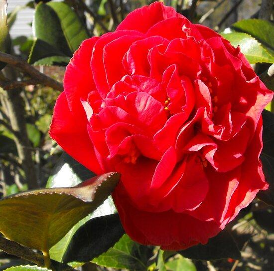 Spring Red by Sharksladie