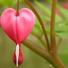 From The Heart by Sharon Woerner