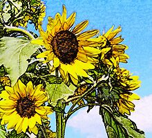 Sunflower blossom drawing  by antkevyv