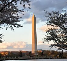 washington monument in april by stampmouse