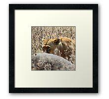 Lion with Buffalo Kill, Serengeti, Tanzania  Framed Print