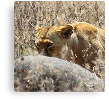 Lion with Buffalo Kill, Serengeti, Tanzania  Canvas Print