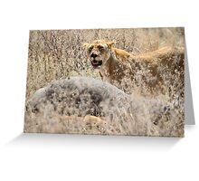 Lion with Buffalo Kill, Serengeti, Tanzania  Greeting Card