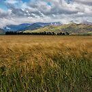 Christchurch New Zealand by Margaret Metcalfe