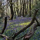 Deep in the quiet wood by Jennifer Bradford