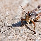 Grasshopper by Ryan Cawse