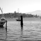 Early morning marina in Hobart Derwent River - panorama-   B & W by lighthousecove