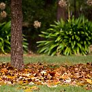 Yackandandah Autumn Series ~ Park In Square by Jane Keats