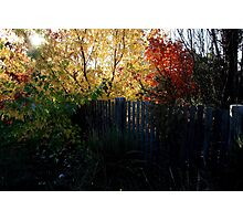 Autumn Leaves - HILL END NSW Photographic Print