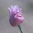 Chives by RosiLorz