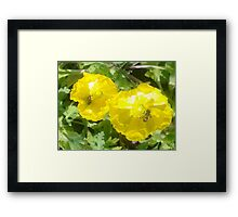 Popping in too.  Framed Print