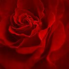 Red Rose by Karen  Betts