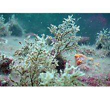Underwater Trees Photographic Print