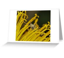 Pollination 22 Greeting Card