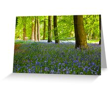 Woodland Scene - Thorpe Perrow. Greeting Card