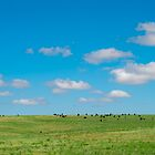 Happy Cows by Mike Hendren