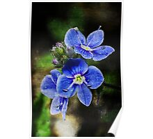 Spring blue blooms Poster