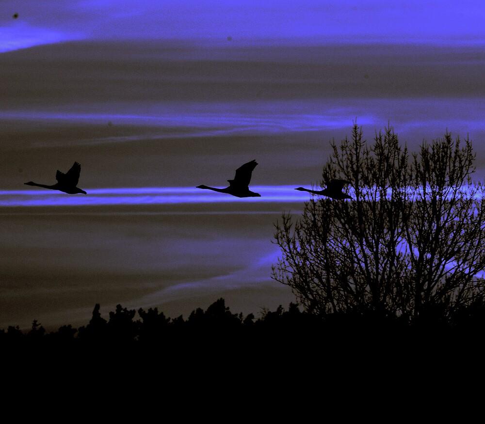 Night flight by Alan Mattison
