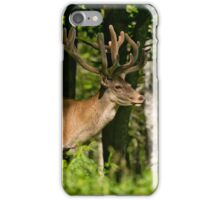 Young Bull Red Deer iPhone Case/Skin