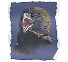 Fledgling Eagle Poster