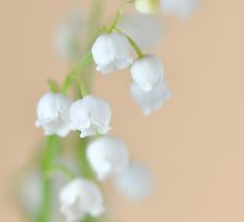 Lily of the Valley by Denitsa Dabizheva